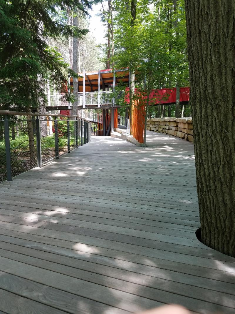 boardwalk path used for canopy walk among trees