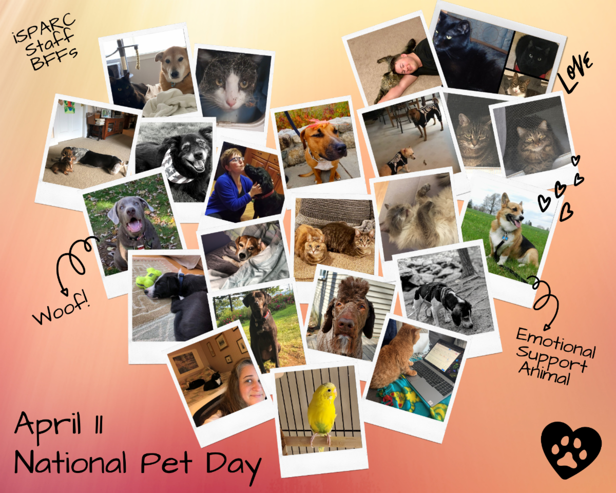 Collage of Staff Pet Photos Dogs Cats and Bird