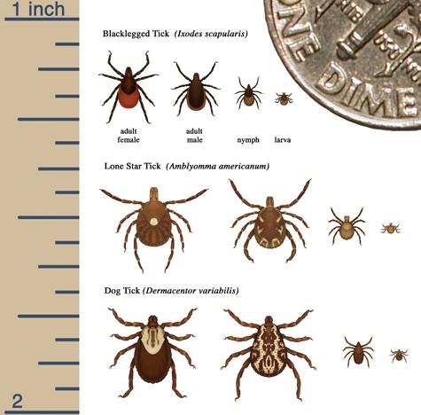 tick sizes