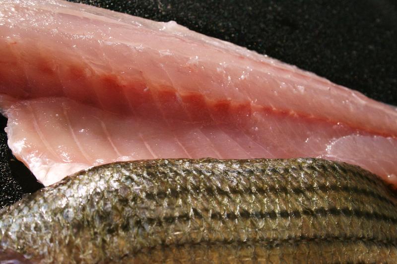 Fresh Striped Bass Fillet