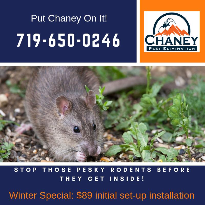 Chaney Pest Control