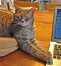 'The laying on of paws' by Sophie the Feline Muse. Photo by Kathleen Ernst.