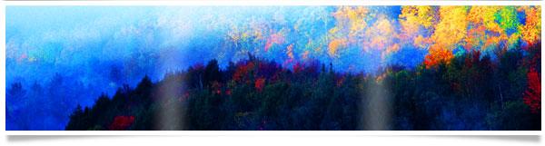 colorful-treescape.jpg