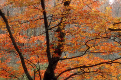 orange-leaves-tree.jpg