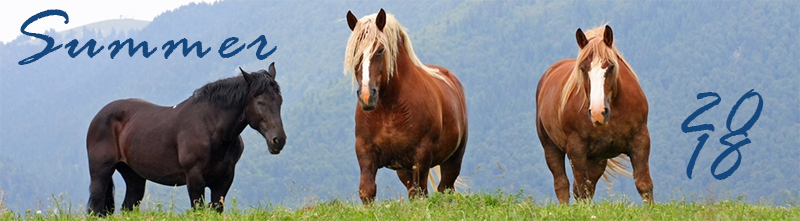 three horses in a green field, summer 2018