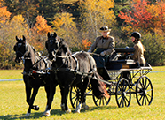 Boo Martin in carriage with participant_ two black horses_ Buster and Charlie_ driving in autumn field