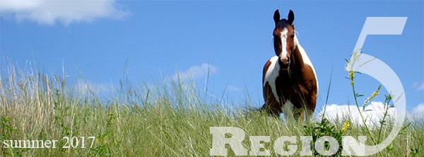 horse in field