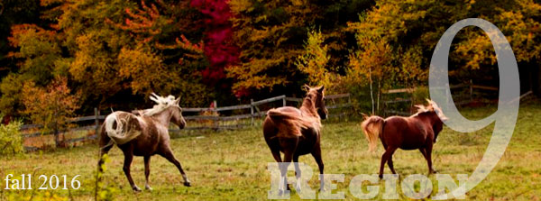 horses in autumn field