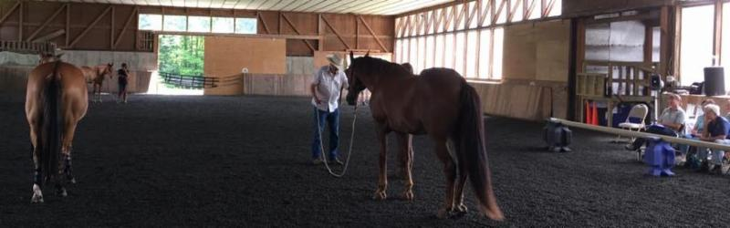 tim hayes working a horse
