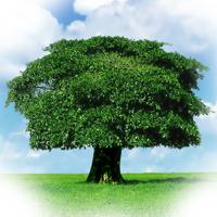 NEPA-BFC Tree