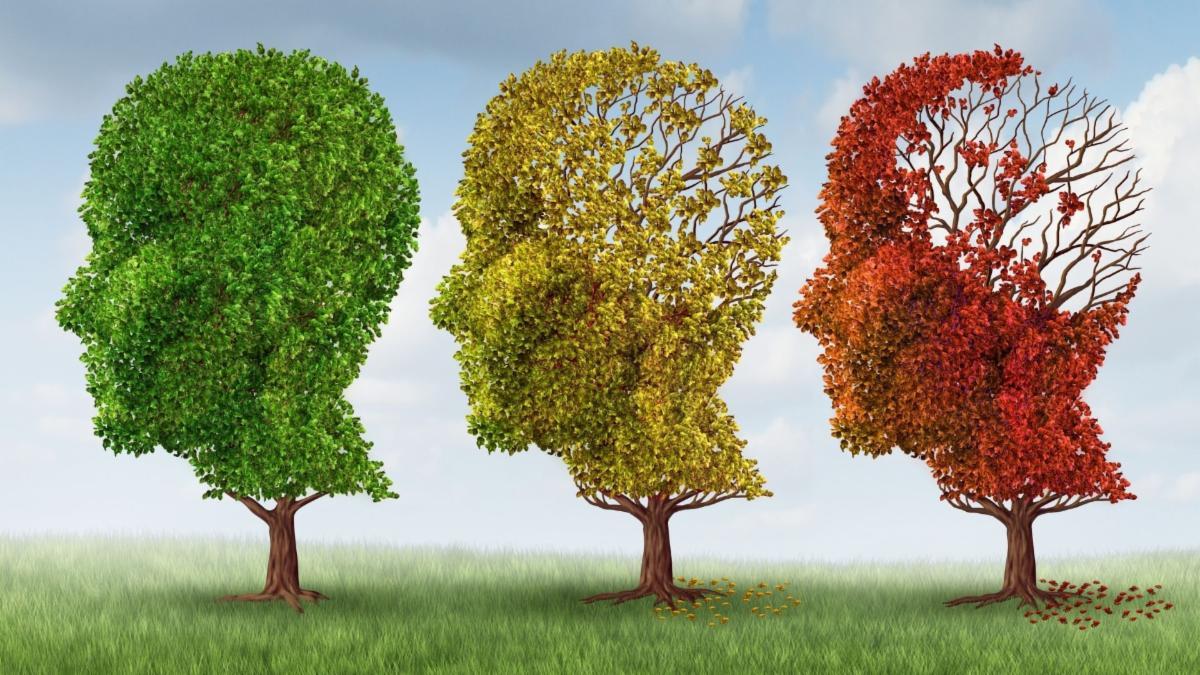 Brain Aging Trees.jpg