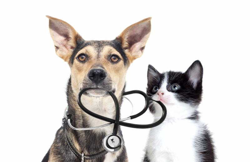 Low Cost Vet Clinic at Wells Brothers Pet Lawn & Garden.