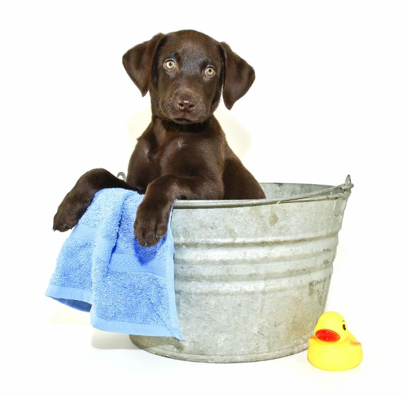 DIY Pet Dip Day Oct 8th at Wells Brothers Pet Lawn & Garden.