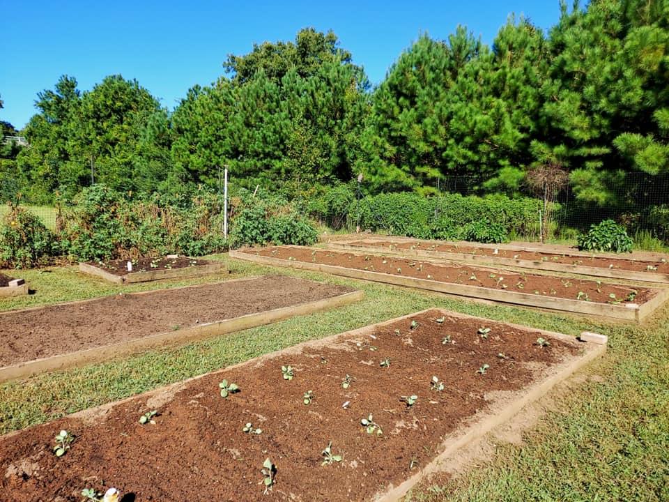 Garden Sept 2021