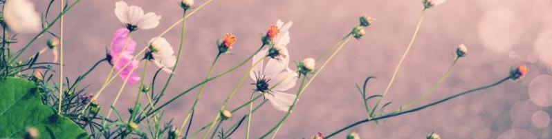 flowers_purple_background.jpg