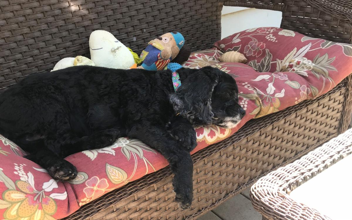 Sanctuary Dog Belle napping