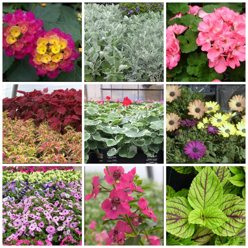 Hanging Basket Coupons..... and much more!