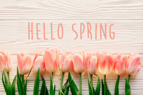 hello spring text sign_ beautiful pink tulips on white rustic wooden background flat lay. flowers in soft morning sunlight with space for text. greeting card concept