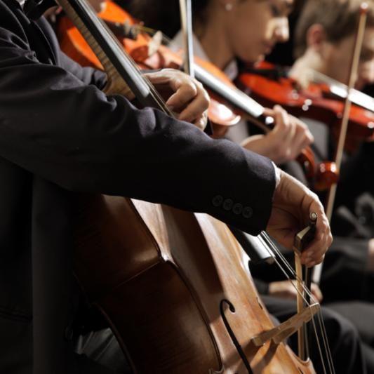 violins_many.jpg