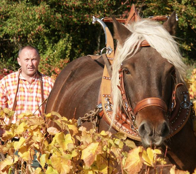 Guyot Horse