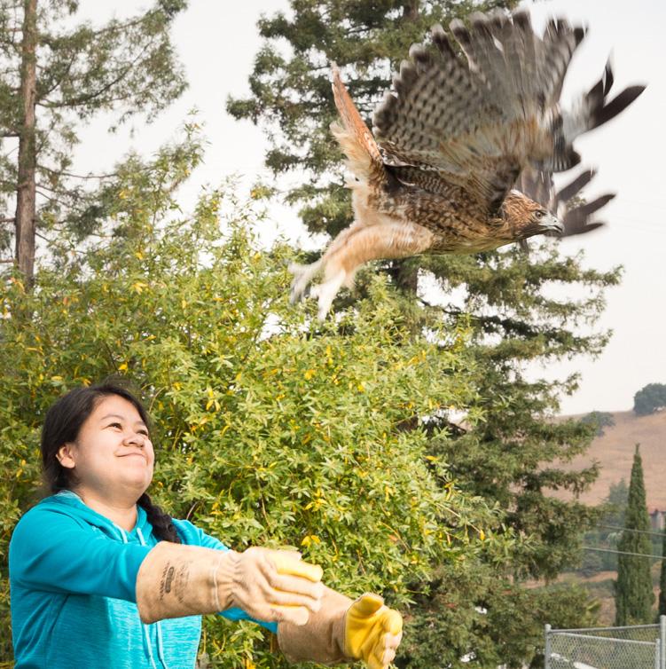 Hawk release
