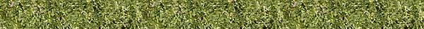 grass-banner.jpg
