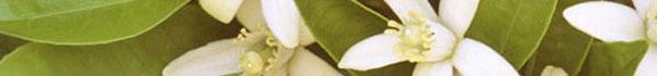 white-flowers-banner.jpg