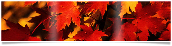 red-fall-leaves-banner.jpg