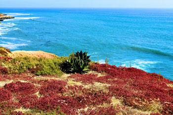 Photo of coastline