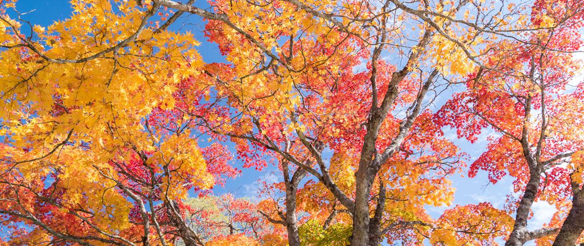 Foto de los árboles de otoño