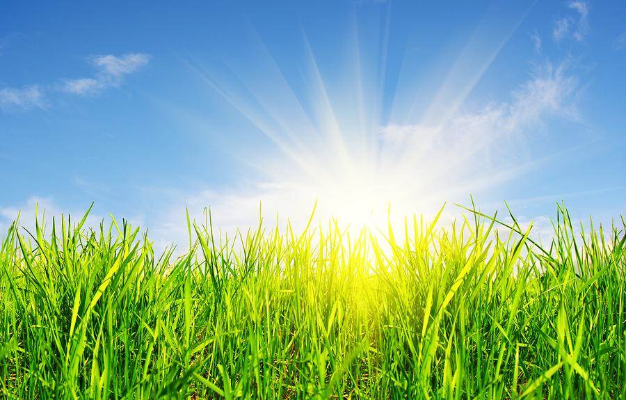 Photo of sun on field of flowers