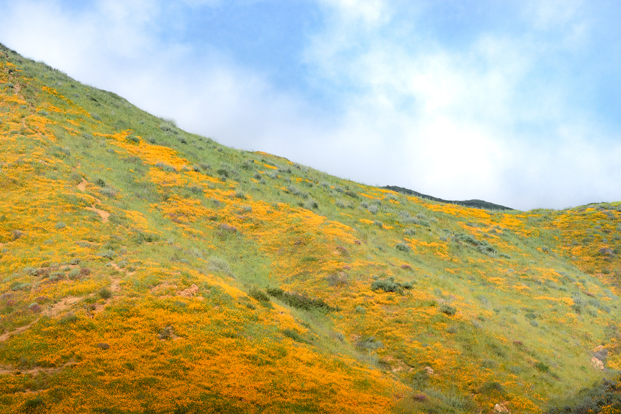 Photo of a hillside with wildflowers