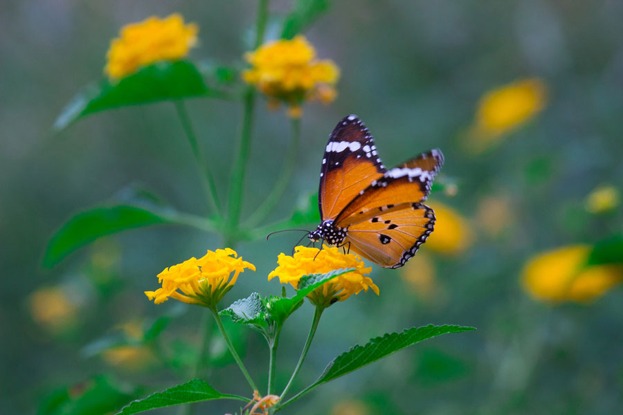 Photo of butterfly and flowers
