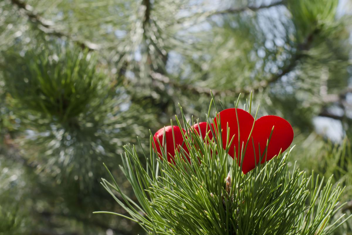 Photo of red hearts in tree