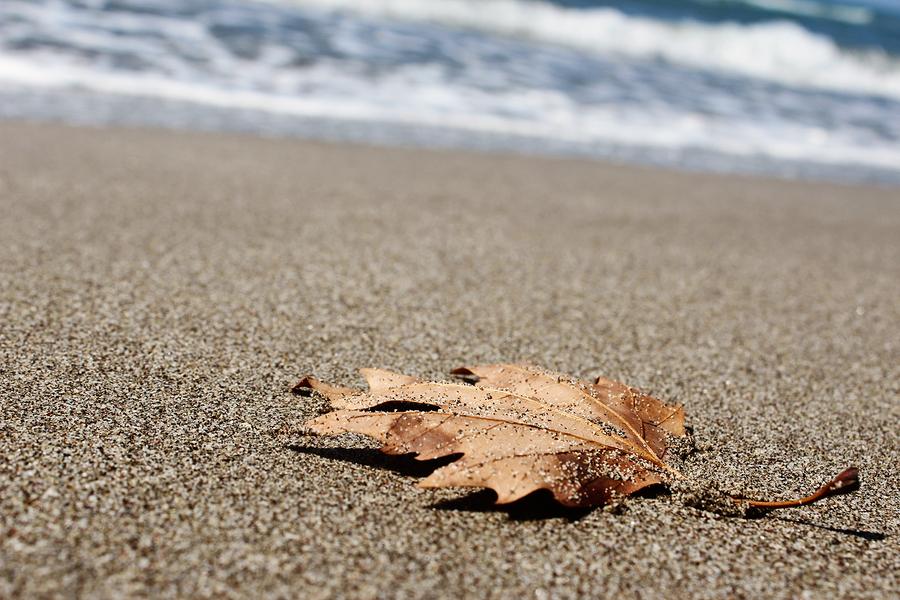 Photo of leaf on beach