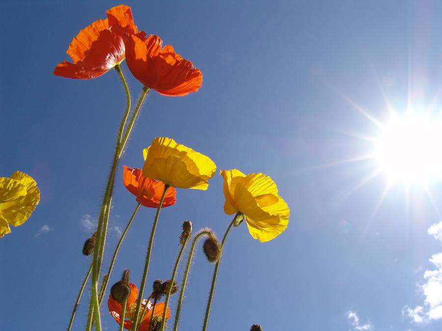Photo of flower in sunlight