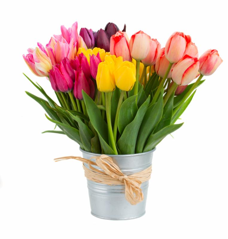 tulips_in_bucket.jpg