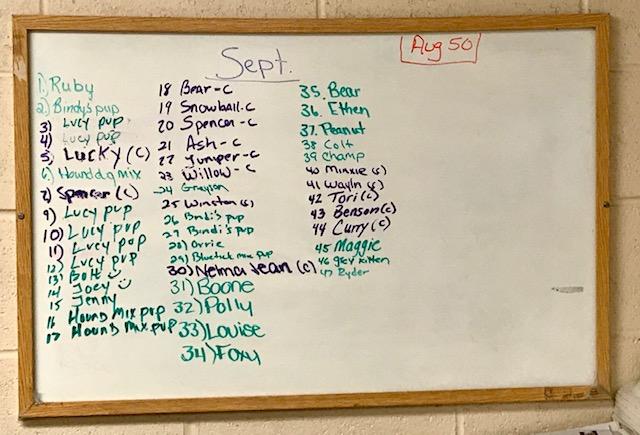 September Adoption board 2019