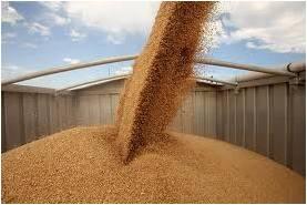 Grain 2