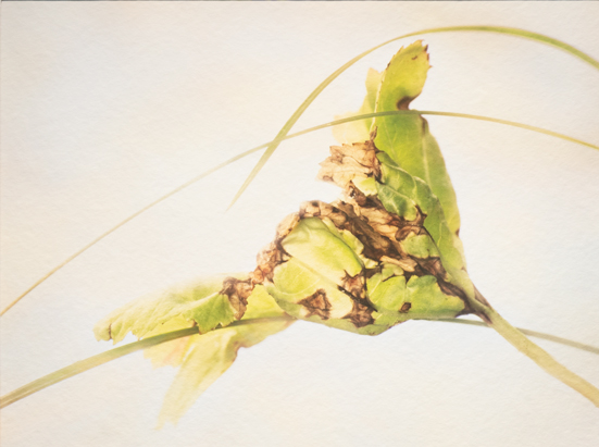 Artwork by Bonnie Lampley