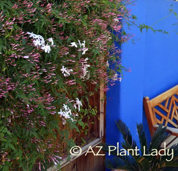 Color Gardens.JPG