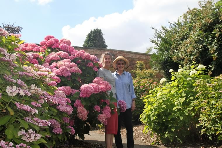 National Hydrangea Collection in Derby
