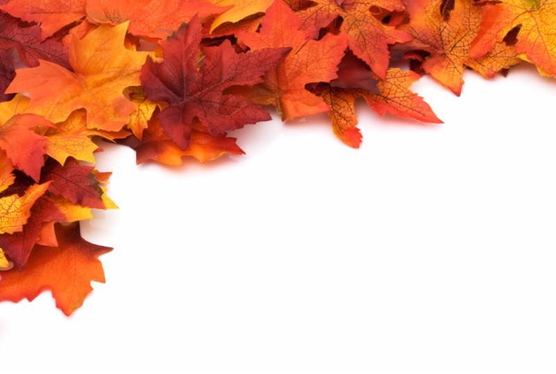 autumn_background.jpg