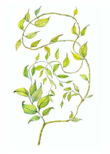 Illustration of a vine created for greeting cards_ wedding invitations_ books. Fairy tale branch with leaves. Green tender watercolor art. Hand-drawn botanical composition