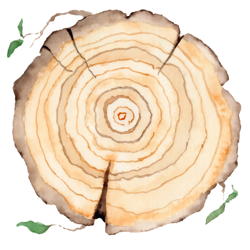 Wood slice. Tree rings. Watercolor illustration.  Painted texture.