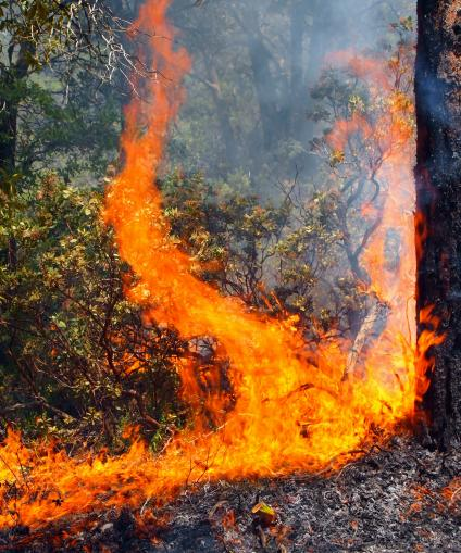 Wildfire burning understory