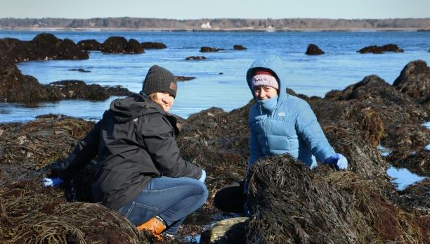Two students conducting field work as part of the New England Coastal Ecology class. They are sitting amongst seaweed-covered rocks at low tide.