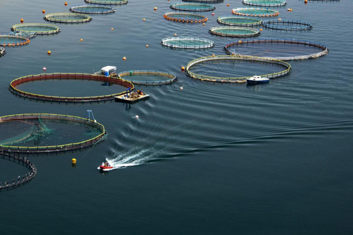 Offshore aquaculture pens from above