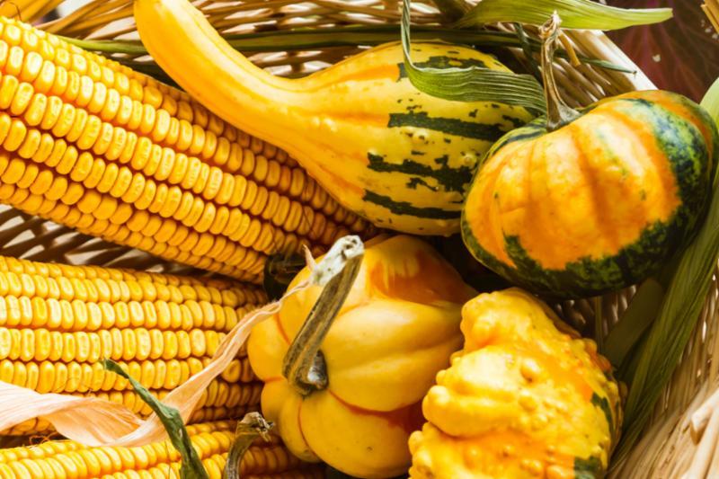 autumn_corn_gourds_closeup.jpg