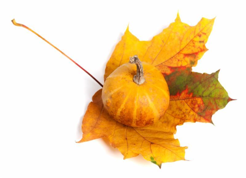 pumpkin_on_a_leaf.jpg